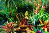 Bromeliad banquet - filtered version