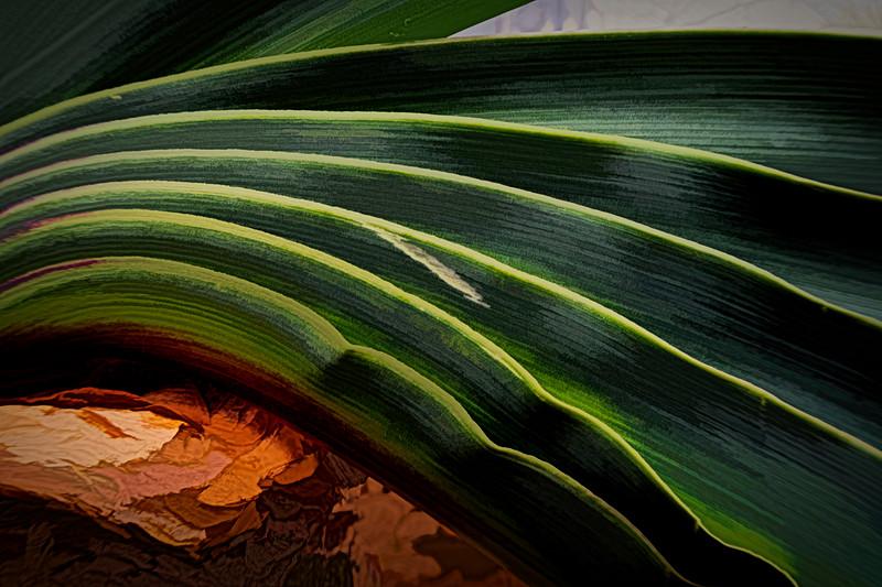 Gifbol leaves - filtered version 1