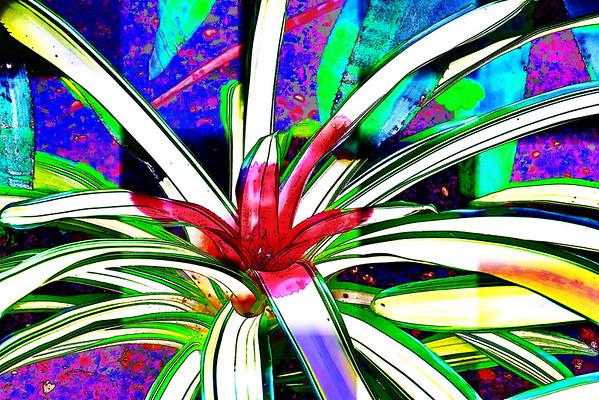 Digital Creations and Manipulations