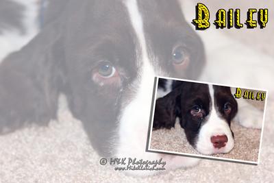 Bailey-Pup