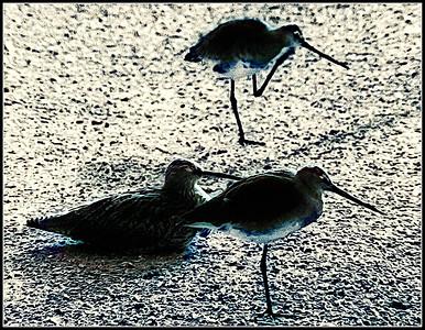 tre uccelli