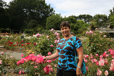 Rose amongst the Roses at Queens Garden.