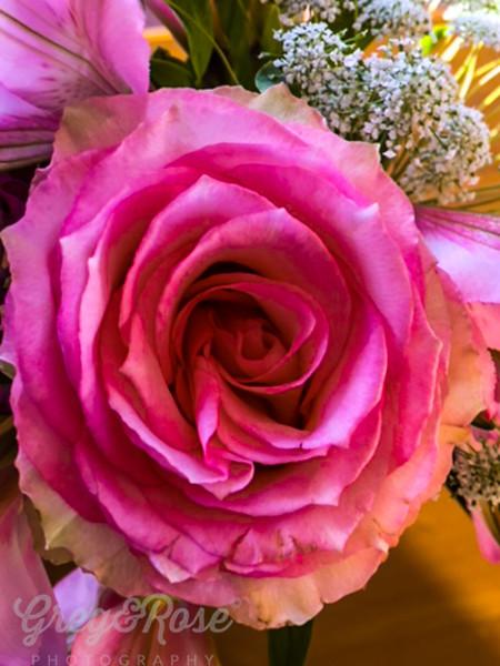 Shocking Pink Rose