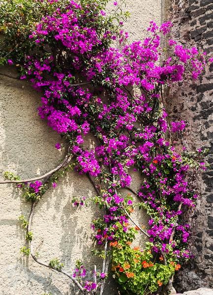 Bougainvillea & Gardenia.