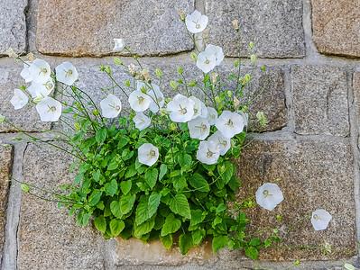Flower in a wall