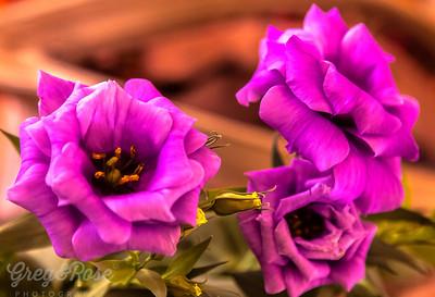 Lithianthus