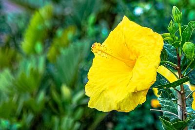 Stunning Yellow