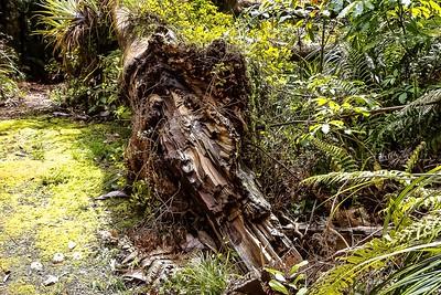 Rotting tree