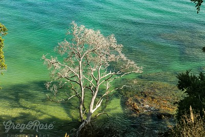 Dead tree on the foreshore