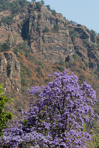 Topotzlan cliffs and Jacaranda.