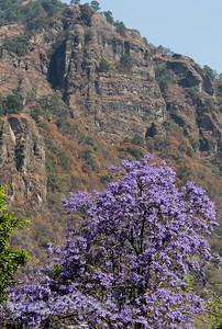 Topotzlan cliffs and Jacaranda.