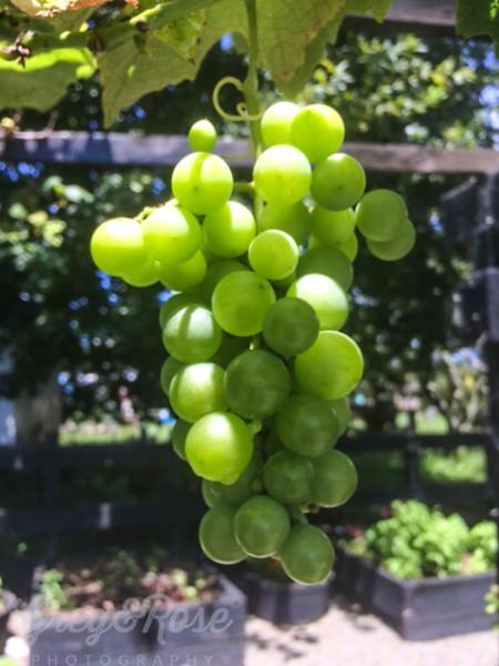 Grape anyone