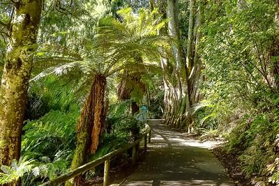 Walk through Pukekura Park