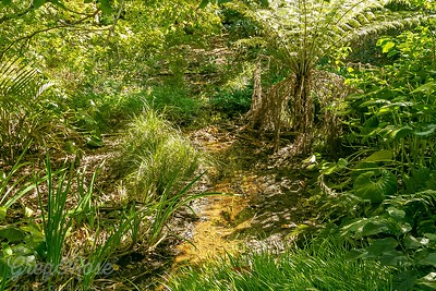 Creek, Ferns, Flaxes Graases and other plants