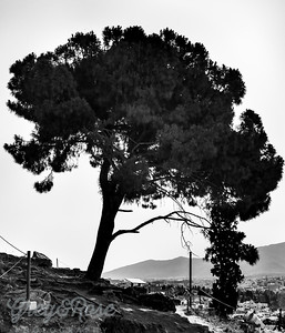 Tree on an Athens Hill