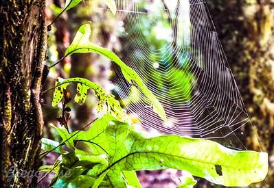 Spider we