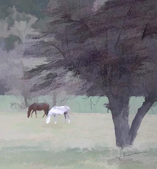 Horses in a Utah field.
