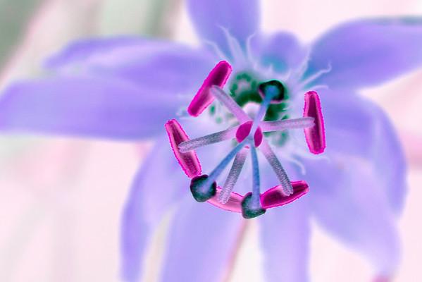 20070814_Flowers_Parks_0002-Edit