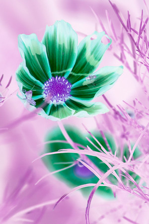 20070814_Flowers_Parks_0004-Edit