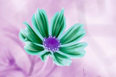 20070814_Flowers_Parks_0005-Edit