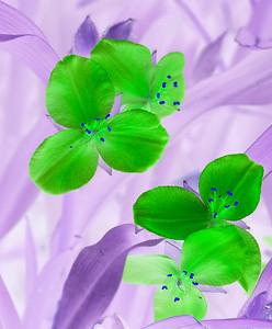 20070814_Flowers_Parks_0013-Edit