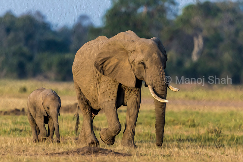 African Elephant with baby following