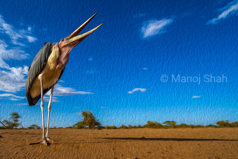 Marabou stork in the early morning sun in Maai Mara