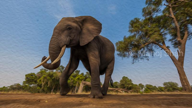 African Elephant in a happy mood in Masai Mara.
