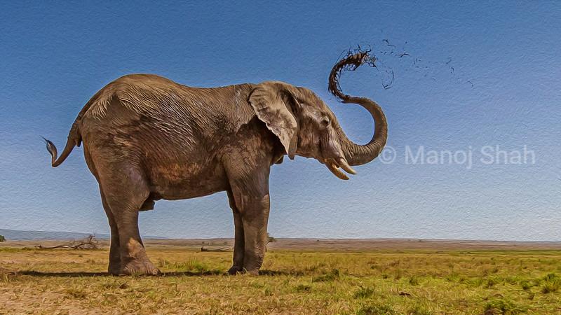 African Elephant spraying mud.