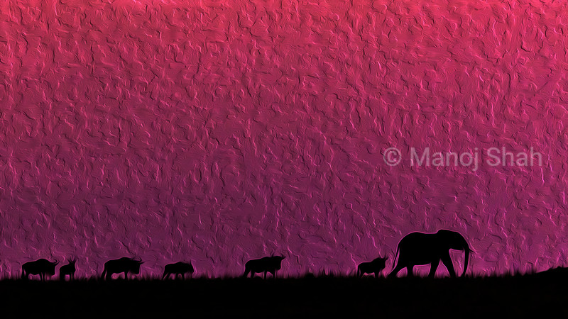 African Elephant joins migrating wildebeest at dawn.