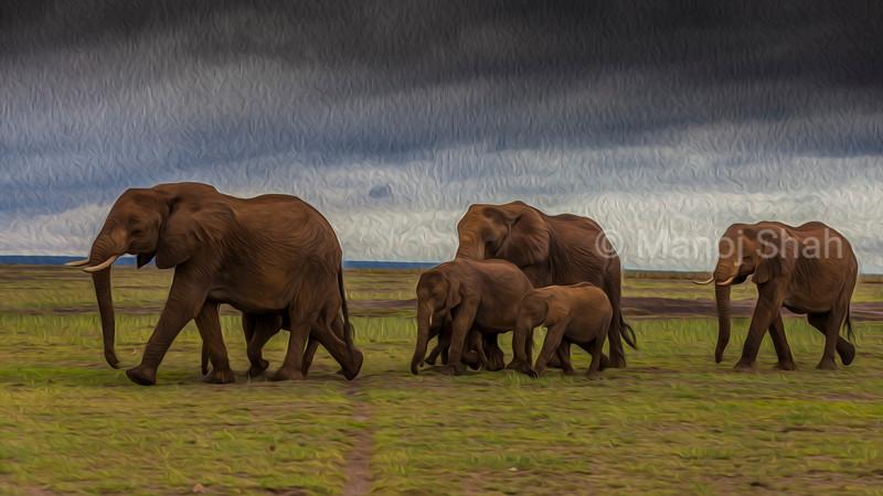 African Elephant herd walking in Amboseli National Park.