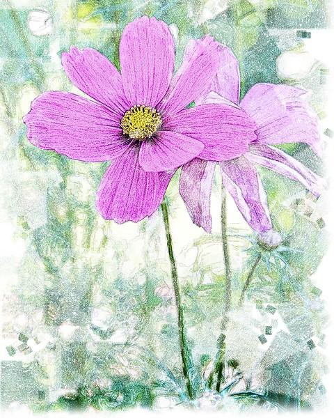 Flower in Pastel