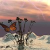 BUTTERFLY  ON  ICE