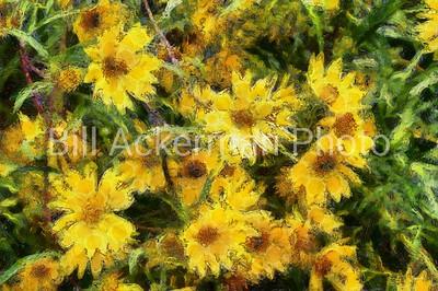 Wildflowers in Van Gogh's Garden