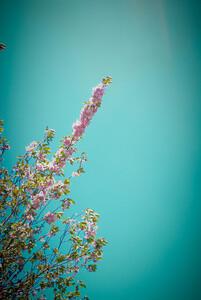 DSC_0029-flores