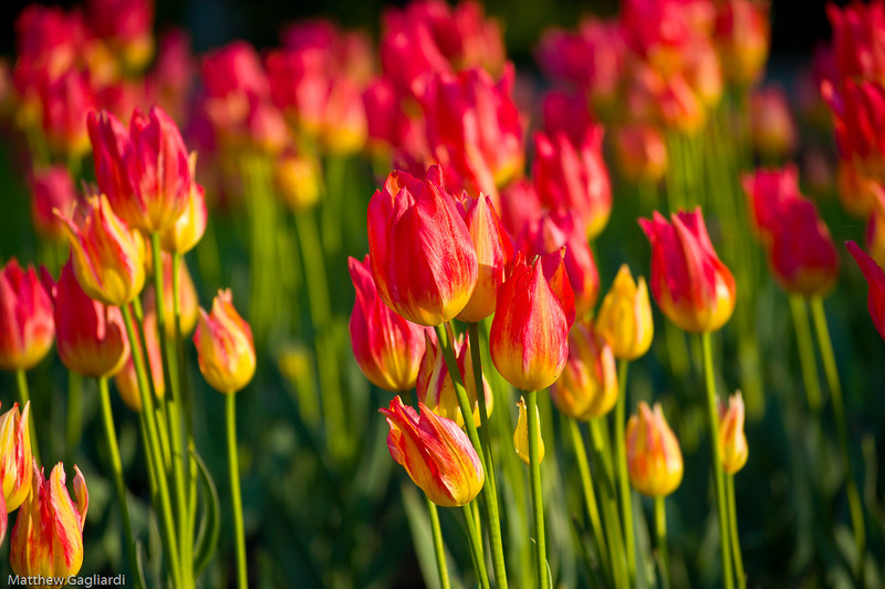flower (2 of 3)