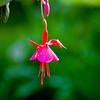 flower (3 of 3)