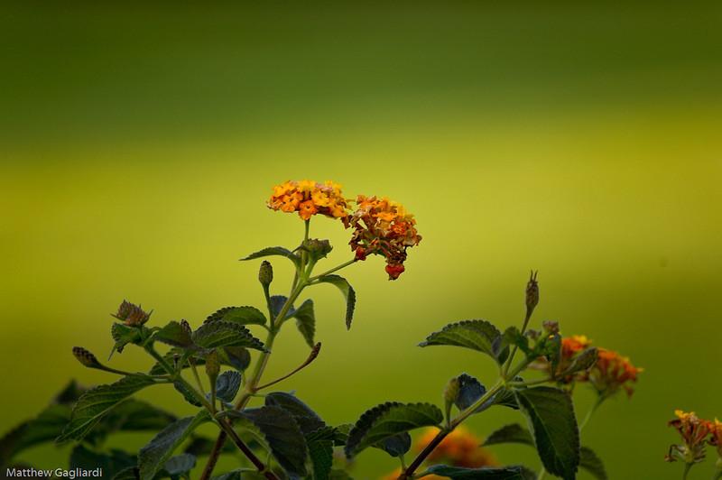 flower (1 of 3)