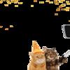 Cats Selfie
