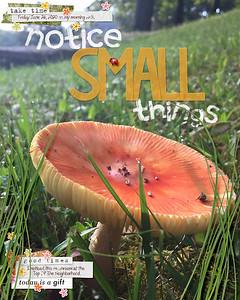 06style-small-mushroom
