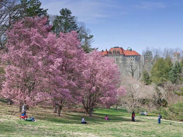 Spring in Morris Arboretum