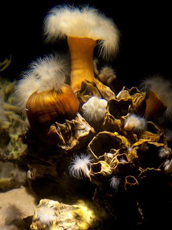 Reef Impression