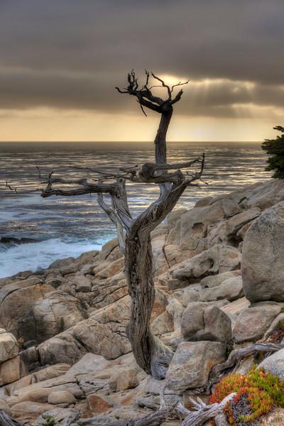 Ghost Tree, 17 Mile Drive, Pebble Breach, CA.