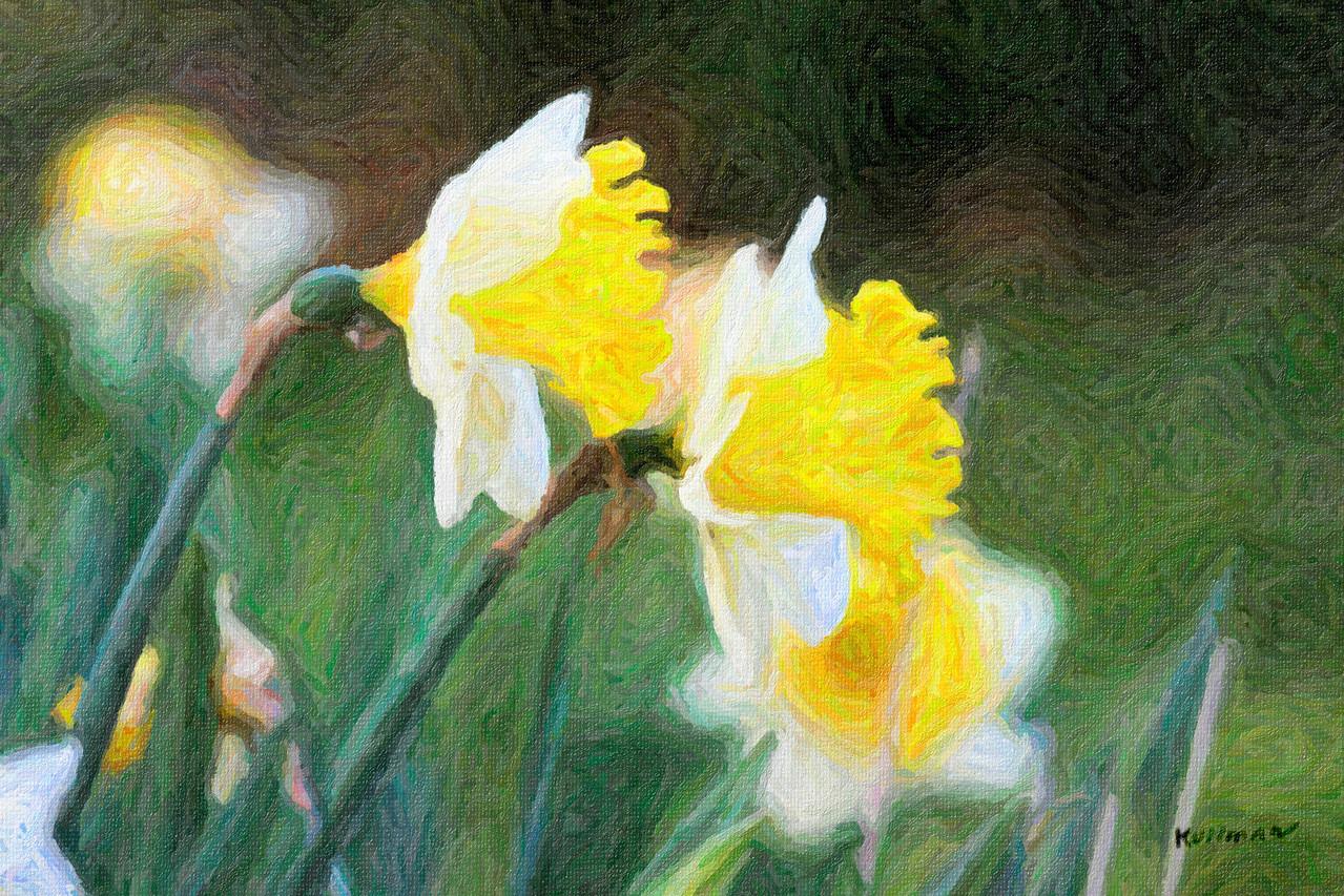 Daffodils<br /> Impasto