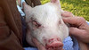 Jasmine at The Pig Preserve