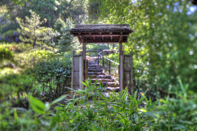 Hakone Gardens, Saratoga, CA. Canon 24mm tilt-shift lens