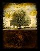 The Quiet Tree
