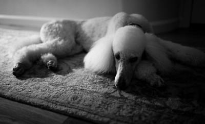 Leica M Monochrom, 35mm Summilux