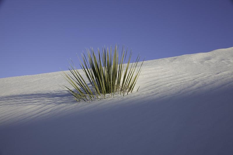 0396,  White Sands New Mexico, New Mexico, White Sands National Monument, desert , white sand
