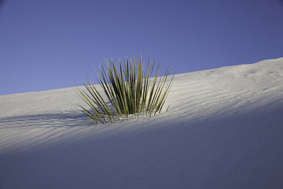 0396,  White Sands New Mexico, New Mexico, White Sands National Monument, desert , white sand